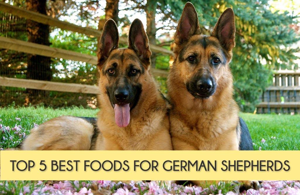 1 Year Old German Shepherd Food