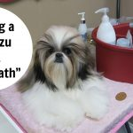 2 Months Old Shih Tzu Bath