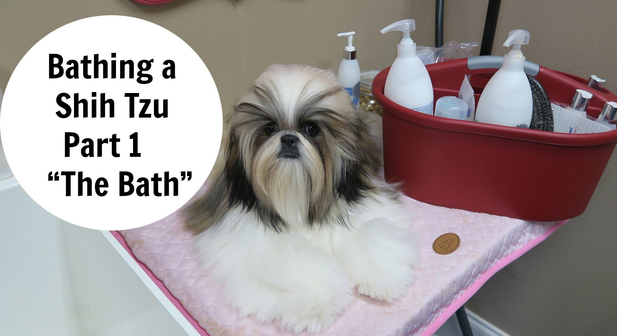 2 Months Old Shih Tzu Bath