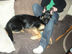 5 Month Old German Shepherd Diet