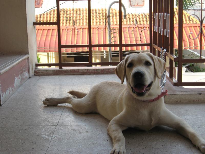 6 Month Old Labrador Retriever Weight
