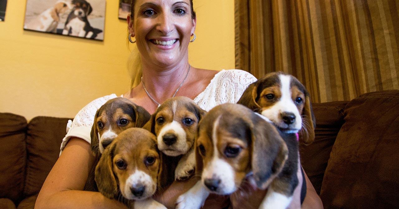 9 Week Beagle Puppy Weight