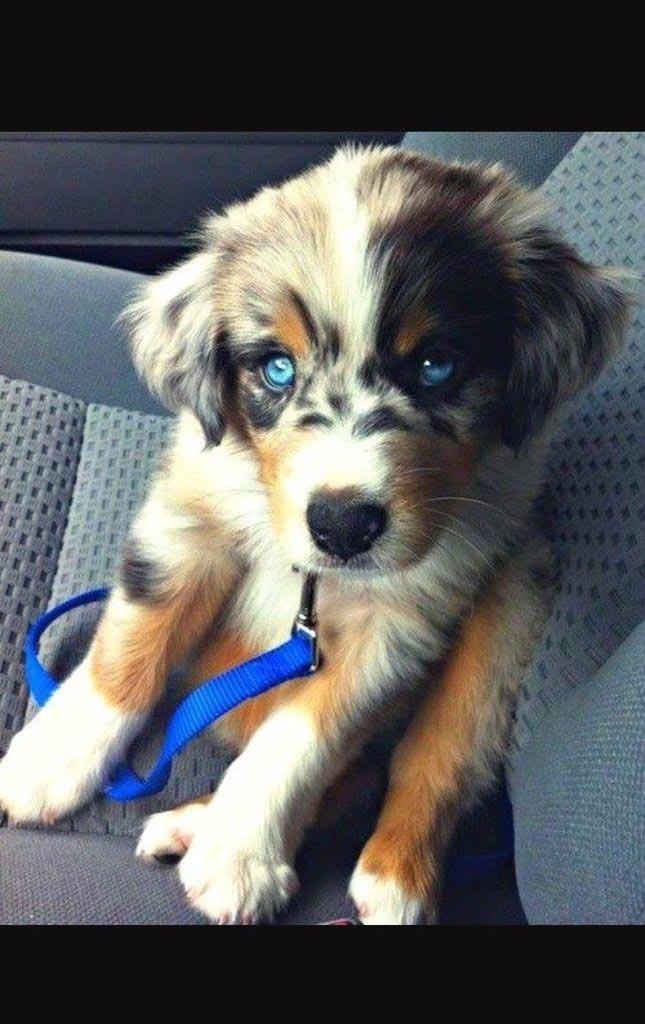 Beagle Husky Mix Kaufen