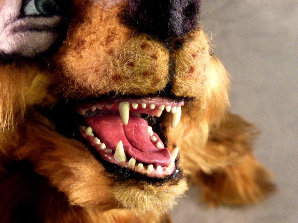 Dachshund Teeth