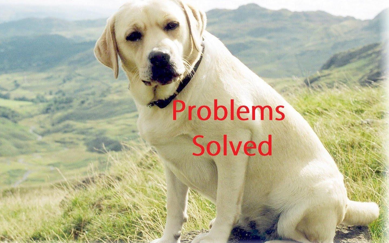 Labrador Dog Skin Problem