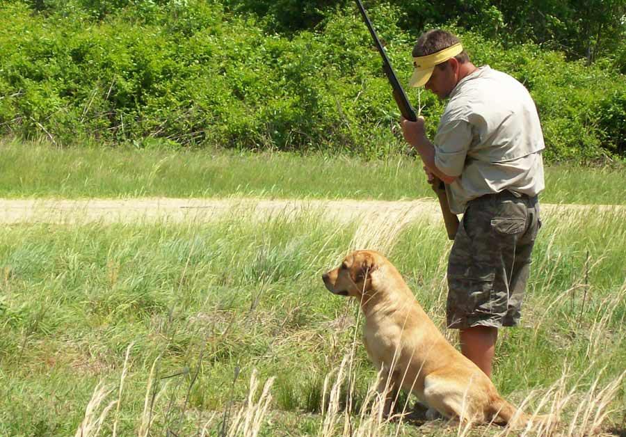 Labrador Retriever Average Size