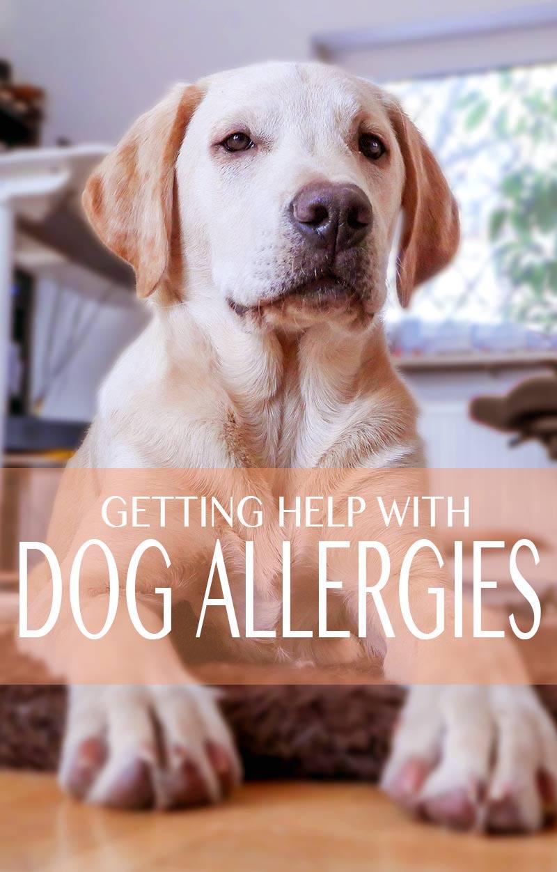 Labrador Retriever Skin Issues