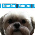 Shih Tzu Eye Problems Hair